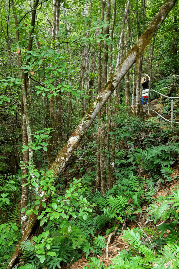 The Grand Canyon walk takes you through rainforest, under overhanging boulders, over creeks and past waterfalls. A must for any hiker visiting the Blue Mountains. #bluemountainshike #grandcanyonloop #canyonwalk #evanslookout #australia #bluemountainsaustralia #bluemountains