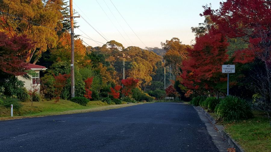 Glorious displays of colour are found everywhere in Blackheath in the Blue Mountains, Australia.