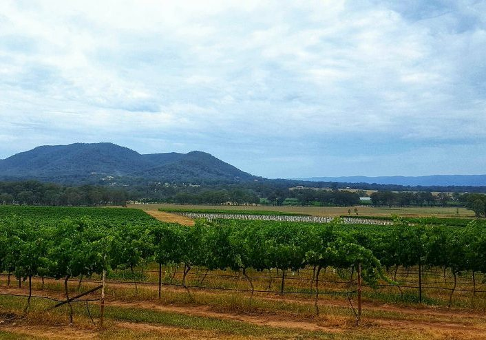 Mudgee is a food and wine haven and a must visit for any foodie. #australia #mudgee #mudgeewines #winetasting